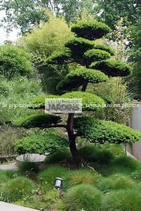 Arbre En Nuage : la phototh que les plus beaux jardins taxus baccata if baies arbre nuage paysagiste ~ Melissatoandfro.com Idées de Décoration