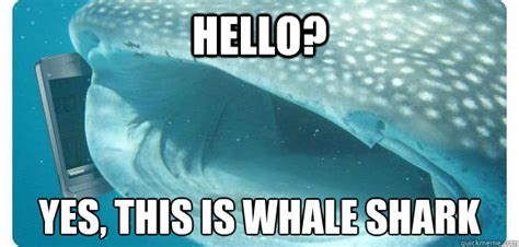 funny shark pictures
