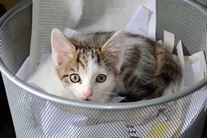 Mit Katze Umziehen : mit katzen umziehen radio tirol ~ Michelbontemps.com Haus und Dekorationen