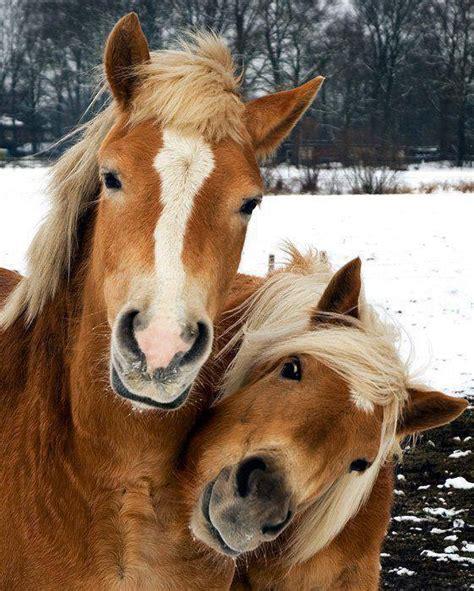horse meaning horses symbolic symbolism