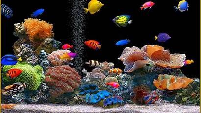 Moving Aquarium Fish Desktop Animated Windows