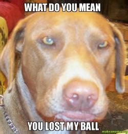 What Do Meme - what do you mean you lost my ball silly face make a meme