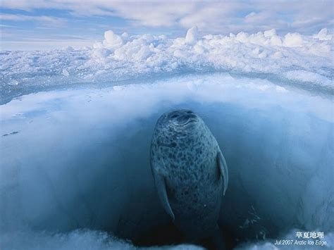 National Geographic Amazing Wallpapersphotos20 Wallcoonet