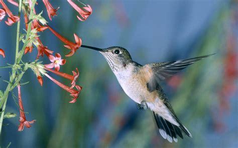 hummingbirds xcitefun net