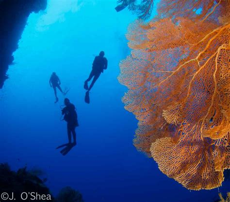 palau scuba diving travel guide best dive resorts liveaboards best time to dive bluewater