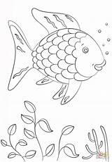 Fish Rainbow Coloring Template Pages Printable sketch template