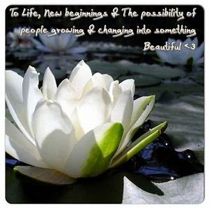 1000+ images ab... White Water Lily Quotes