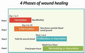 Skin Rejuvenation  U0026 Wound Healing  U2014 Spring Oasis
