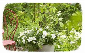 Plantes Vivaces Pour Massif : conseils jardin astuces et conseils jardin botanic botanic ~ Premium-room.com Idées de Décoration