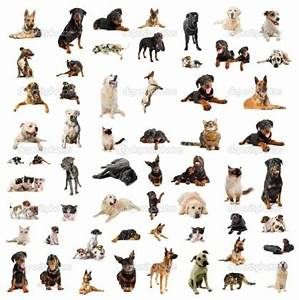 Tag For Types of dogs and thier names : Tag For Types Of ...