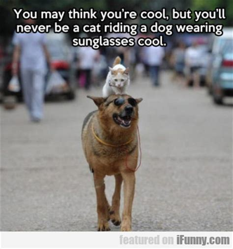 Cool Dog Meme - you may think you re cool but you ll never be a ifunny com