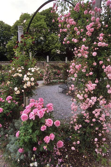 mottisfont abbey rose garden hampshire england  awes