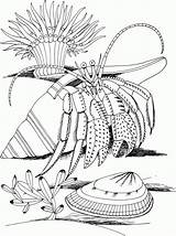Coloring Crab Pages Hermit Printable sketch template