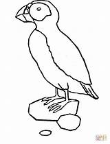 Puffin Coloring Pages Printable Clipart Template Popular Penguin sketch template