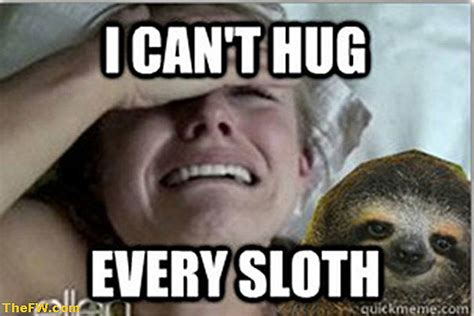 Cute Sloth Meme - image gallery kristen bell sloth funny