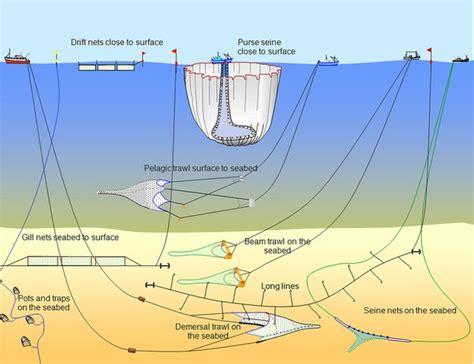 overfishing panic   north atlantic