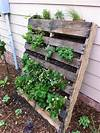 10 Wood Pallet Vertical Garden on Your Wall   Pallets Designs pallet vertical garden project