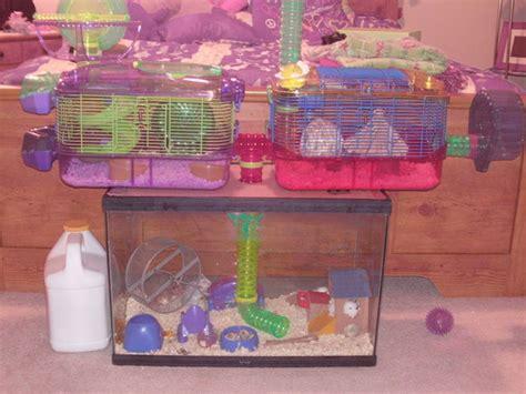 robo cuisine robo hamster cages pixshark com images