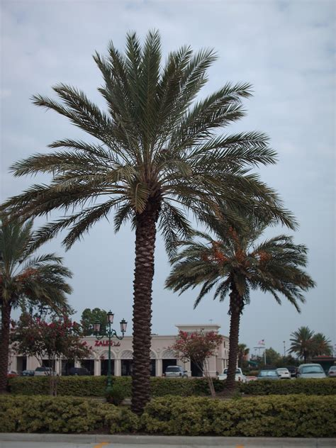 Palm Tree Sales Online Home