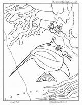 Coloring Fish Sea Angel Printable Angelfish Ocean Seashore Animal Animals Colouring Drawings Adult Drawing Sheets Zentangle Template Shore Colouringpages Getcoloringpages sketch template