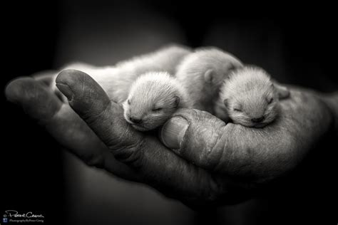 500px Blog » » 21 Photos Of Baby Animals That Literally