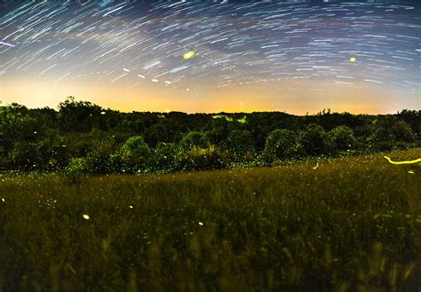 Firefly Photography Mike Lincoln Photography