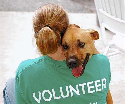 Volunteer In Sandpoint Panhandle Animal Shelter