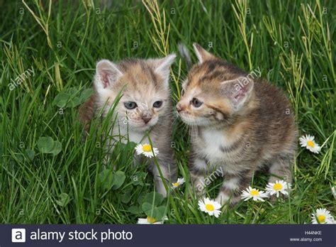 Katzen Pflanzen Fernhalten by Katzen Pflanzen Fernhalten Giftige Und Ungiftige
