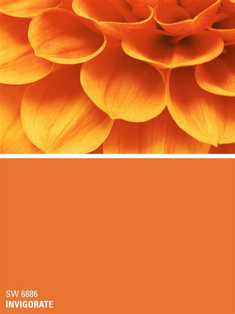 25 best ideas about orange paint colors on