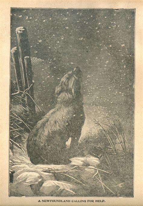 newfoundland dog graphic graphic vintage images