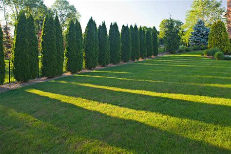 landscape screening trees screening and privacy landscaping by cording landscape design cording landscape design
