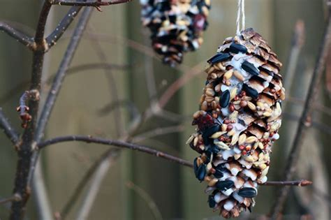 vogelfutter selber machen vogelfutter zapfen diy