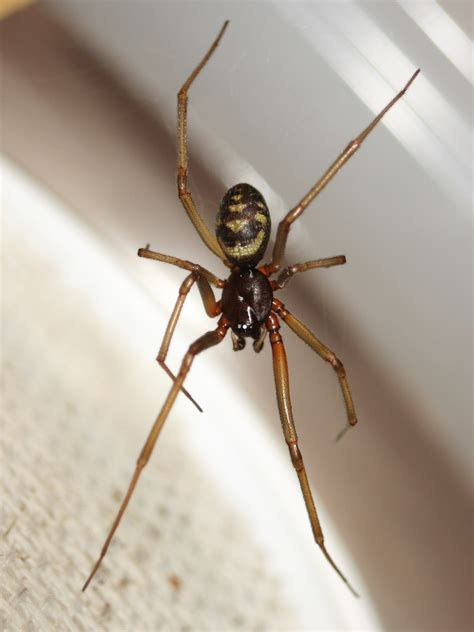 spider wallpapers high quality