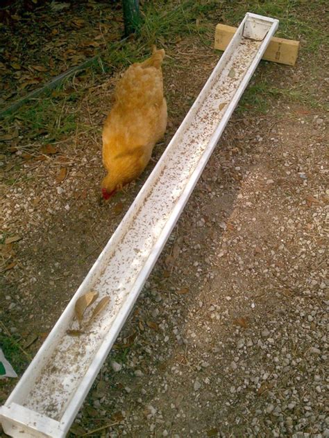 diy chicken feeder 10 diy chicken feeders and waterers