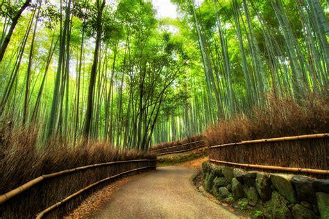arashiyama bamboo grove kyoto japan  ultrahd