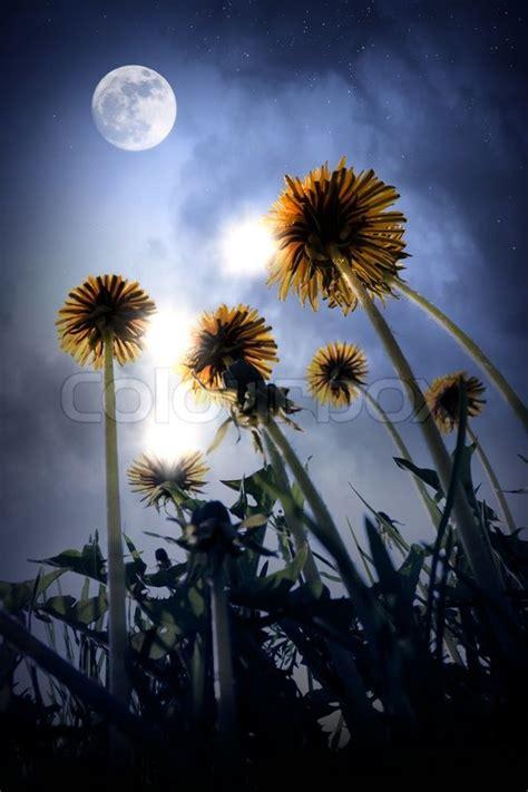 beautiful night landscape  fantasy world stock photo