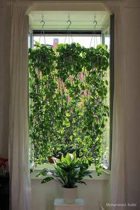 Window Plants by Marvelous Indoor Vines And Climbing Plants Decorations 57