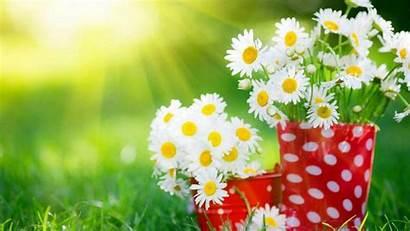 Flowers Desktop Wallpapers Widescreen