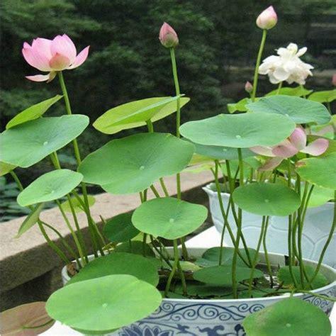 chambre hydroponique 1000 idées à propos de jardinage hydroponique sur