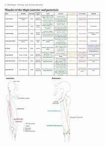 203 Best Images About Anatomy  U0026 Physiology  Diagrams