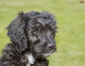 Popular Mixed Breed Dogs
