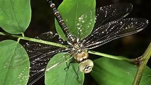 Ameisen Mit Flügel : insekten klein aber m chtig wissen themen ~ Buech-reservation.com Haus und Dekorationen