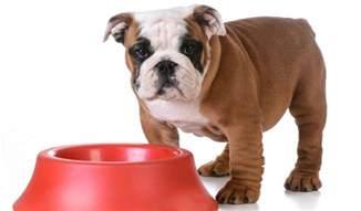 Best Dog Food for English Bulldog Puppies