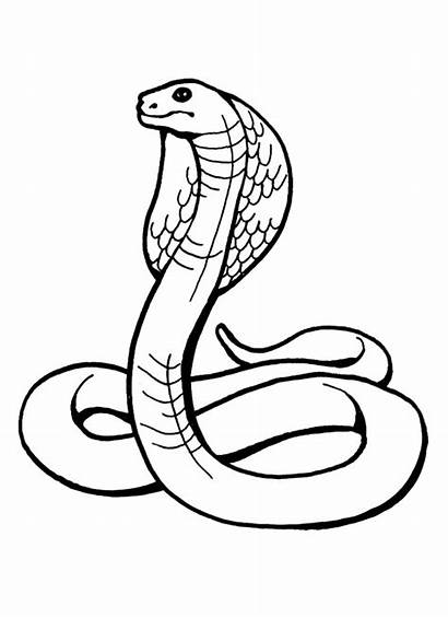 Snake Coloring Pages Printable