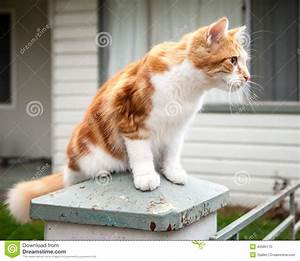Cute Young Ginger And White Tabby Cat Perched On Pillar ...