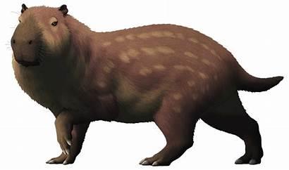 Biggest Rodent Prehistoric Josephoartigasia Monesi Extinct Pleistocene