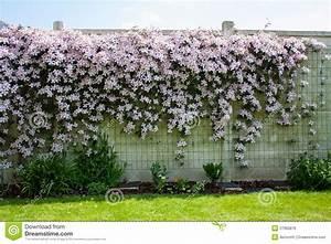 Mur De Fleurs : bordure de haies de fleur sur le mur blanc photos libres de droits image 27965878 ~ Farleysfitness.com Idées de Décoration
