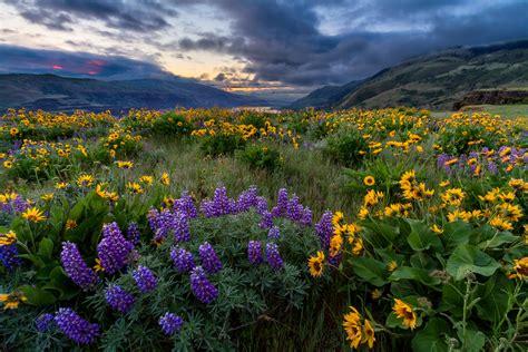 Latest Work: Rowena Spring Sunrise - Landscape Photography