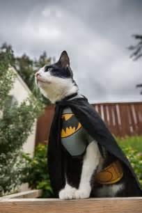 batman cat irti picture 5689 tags batman cat costume epic