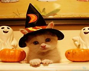 Cute Halloween Pictures – Festival Collections